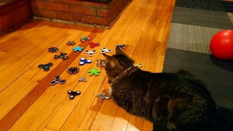 cat fidget