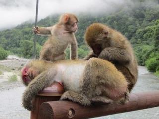 サルの家族