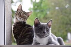 cats-2896624_1280