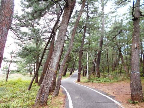 28番への道(琴ヶ浜)