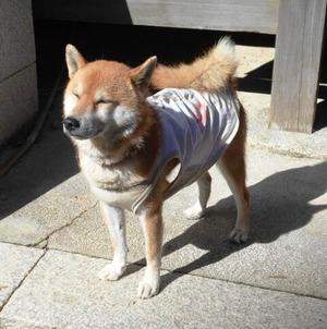 西山興隆寺犬1