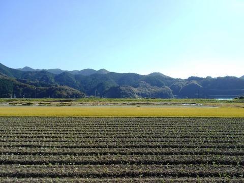 39番への道(整然とした畑)