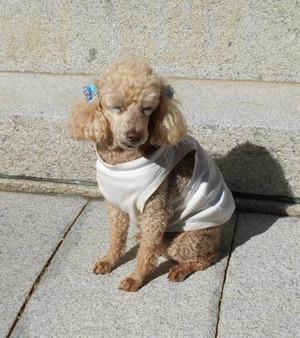 西山興隆寺犬2