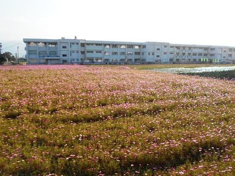 霊山参り(コスモスと学校)