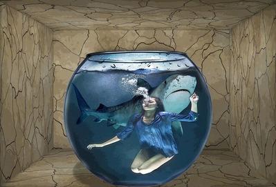 shark-3602509_1920