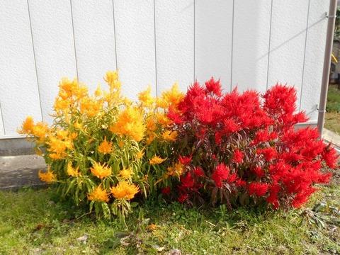 霊山参り(赤と黄色の花)