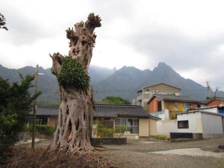 2012年3月屋久島&九州旅行 044