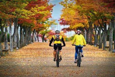 紅葉の自転車