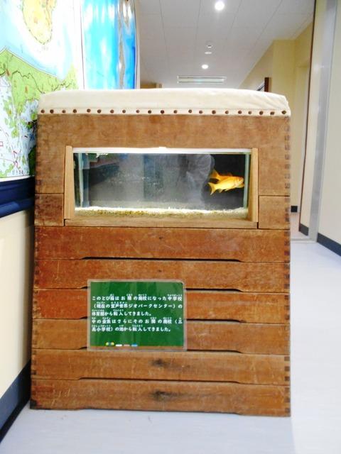 24番への道(室戸水族館2)