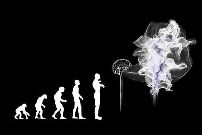 evolution-3885331_1920