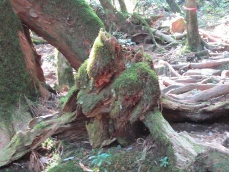 2012年3月屋久島&九州旅行 030