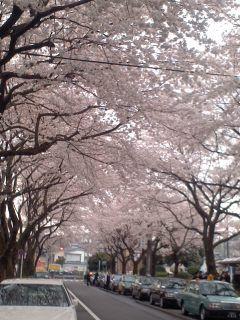 高尾の桜120410