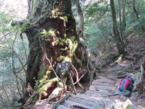2012年3月屋久島&九州旅行 031