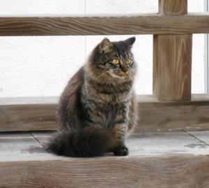 琴弾八幡宮黒猫