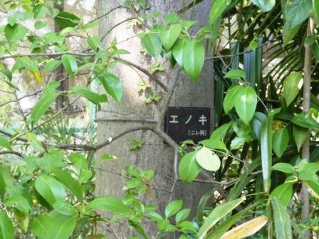 玉川上水 006