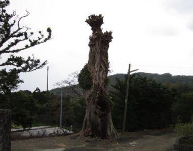 2012年3月屋久島&九州旅行 043