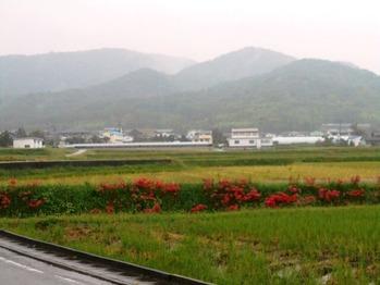 11番への道(マンジュシャゲ)