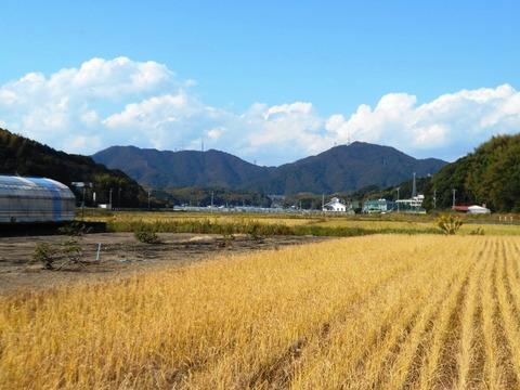 34番への道(畑)