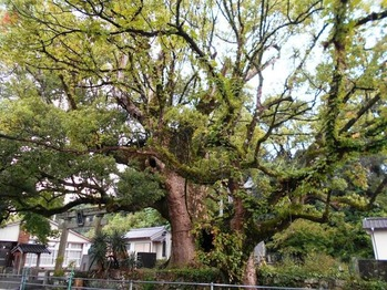 20番への道(大木)