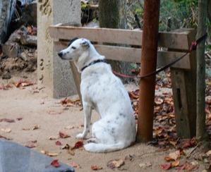 58番仙遊寺の犬