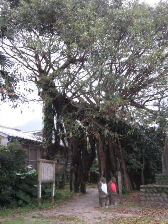 2012年3月屋久島&九州旅行 061