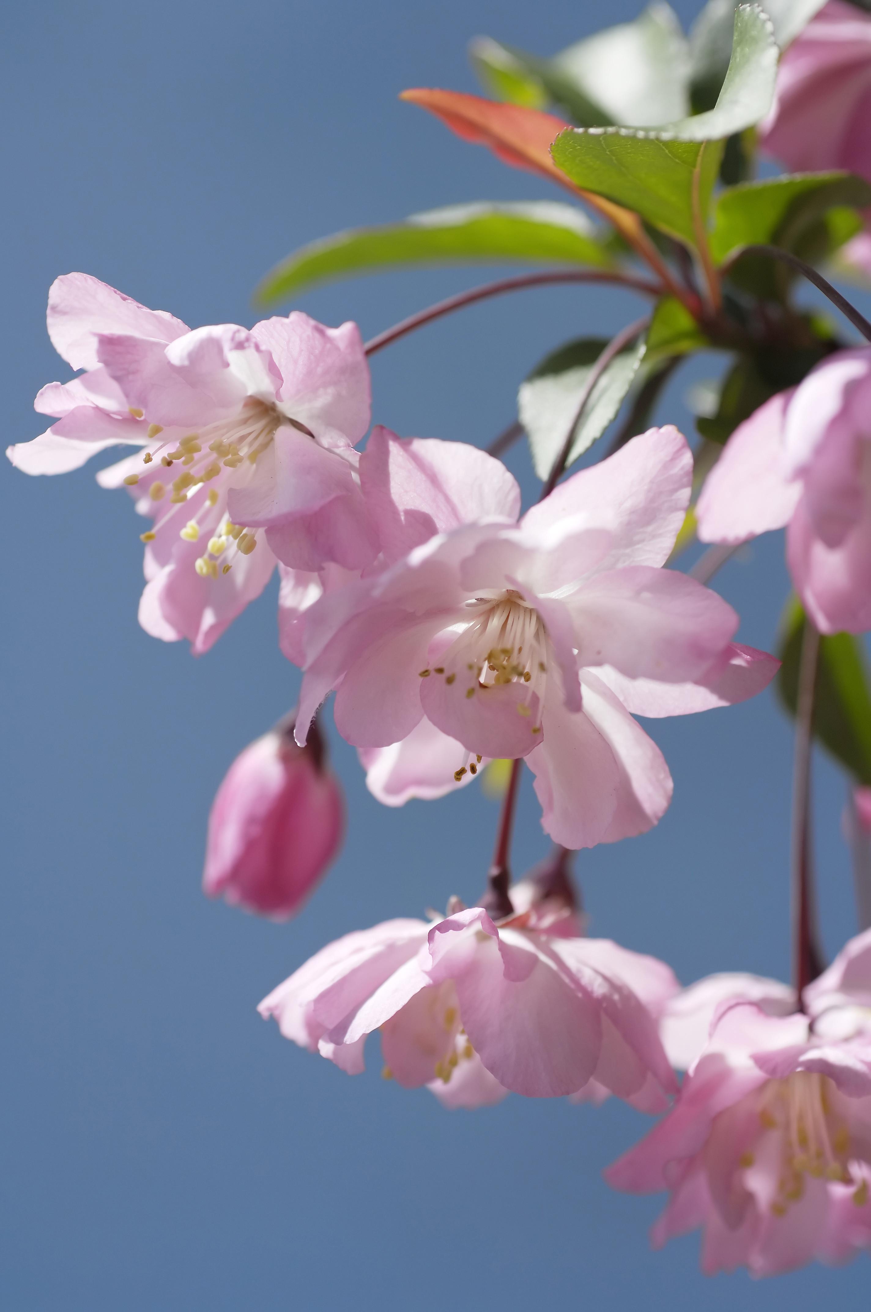 22393e063b101 桜は咲きましたが、今日も風は冷たかったですね。 6日は、敦賀市内の小中学校の入学式。 明日は、早翠の入園式と両園の始業式。
