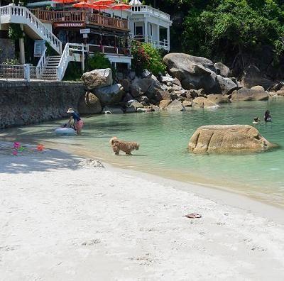 サムイ島のビーチ、クリスタルビーチ17