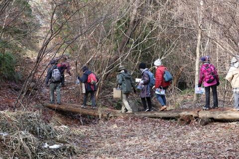 サルナシ湿地の木道を渡る参加者