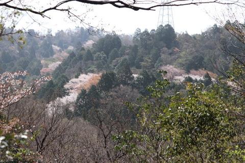 2日雲興寺側からの山桜コース