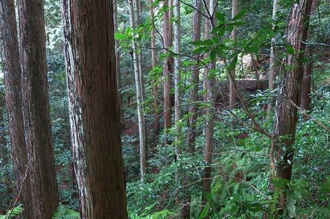 施業予定人工林1