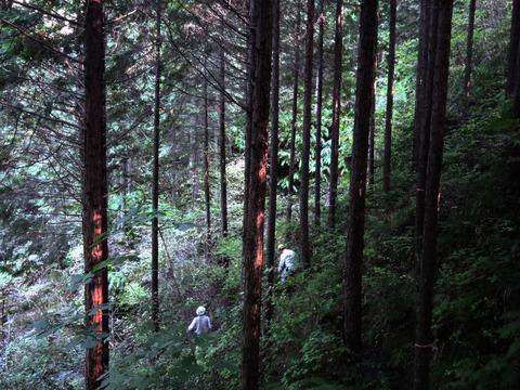2011018東大演習林