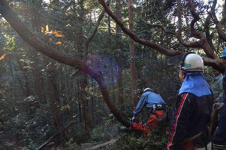 image002 (2)人工林整備
