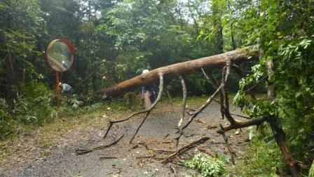 P1040057松枯死木処理