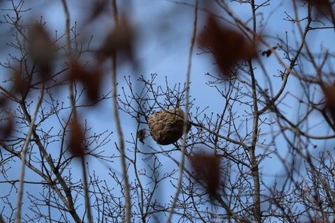 IMG_9433ハチの巣