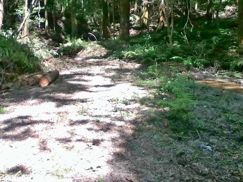 20170527定例人工林