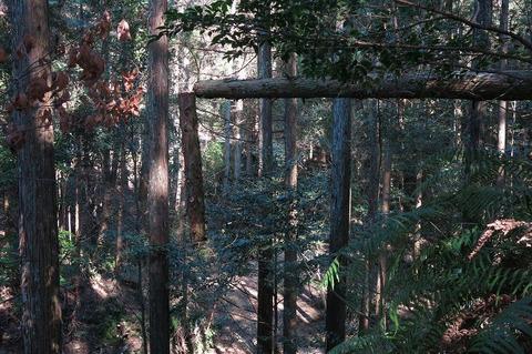 20170314定例人工林
