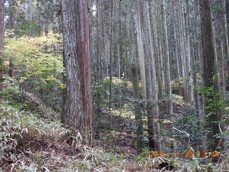 DSCN9996トイレ下人工林