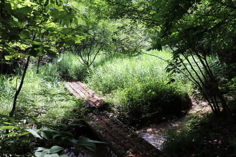 サルナシ湿地作業前