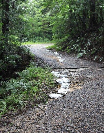 荒れた林道 (2)