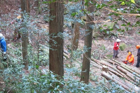 2017定例人工林