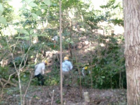 s-CIMG144420201013雑木