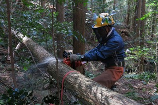 20190212定例人工林1
