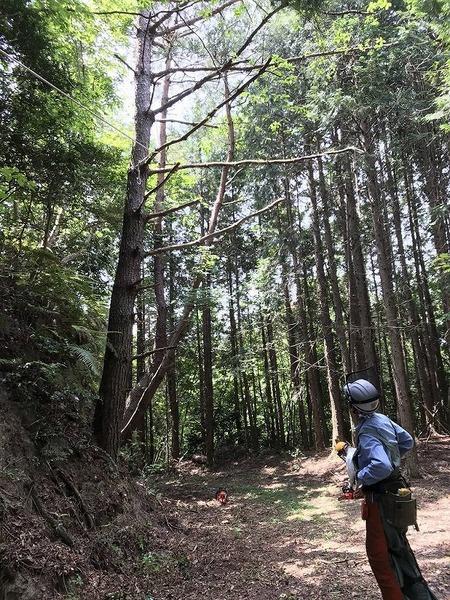 s-20200609人工林5