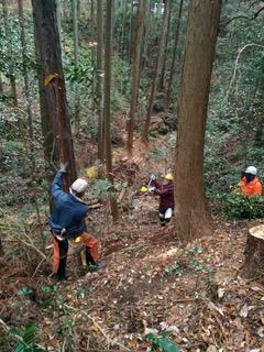 20181211定例人工林