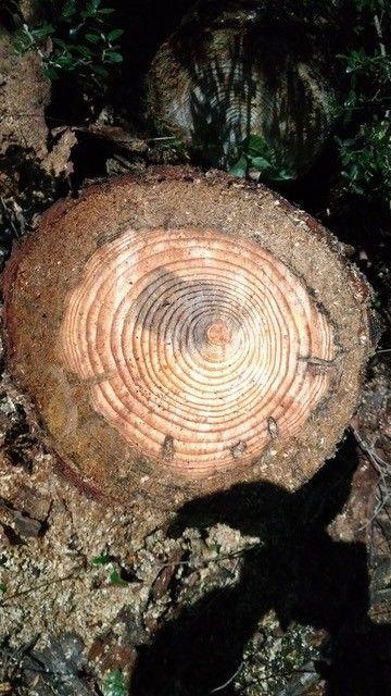 20090824人工林定例