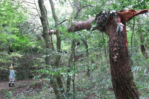 定例人工林9 2