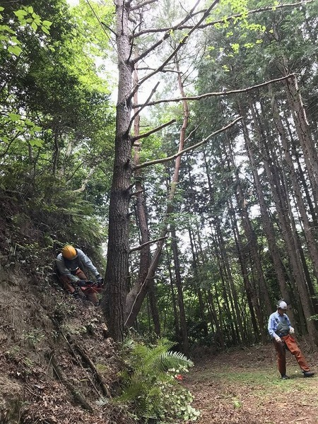 s-20200609人工林3
