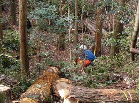 DSCF1372灌木整理伐