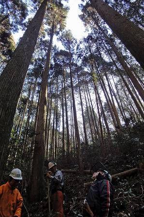 24人工林作業2