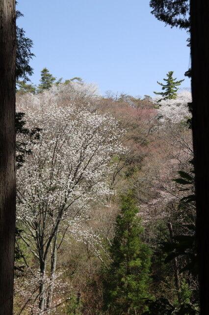31日山桜コースからの展望